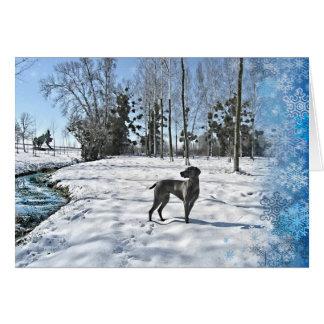 Laissez lui neiger, laissez-le neiger, laissez-le carte de vœux