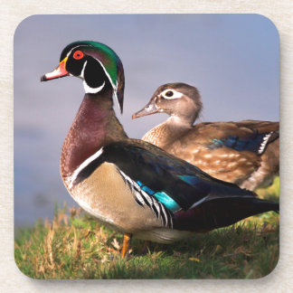 Lakeside, canard en bois sous-bock