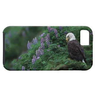 L'Alaska, île d'Unalaska Eagle chauve parmi Nootka Étuis iPhone 5