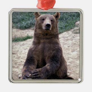 L'Alaska, Ursus du sud-est d'ours de Brown de Ornement Carré Argenté