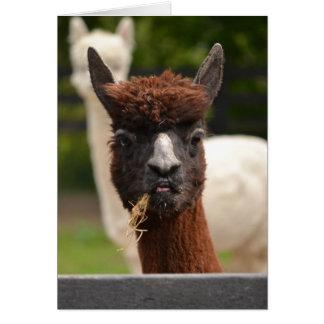 Lama - carte de voeux vierge