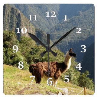 Lama Horloge Carrée