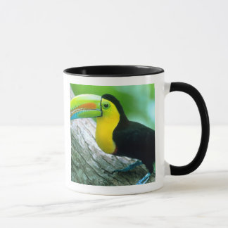 L'AMÉRIQUE CENTRALE, Panama, île 2 de Borro le Mug
