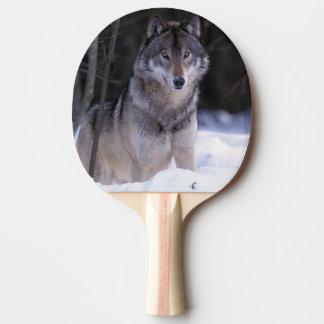 L'Amérique du Nord, Canada, Canada oriental, loup Raquette Tennis De Table