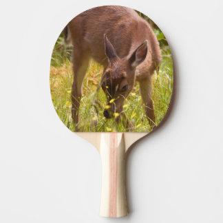 L'Amérique du Nord, Canada, la Reine Charlotte Raquette Tennis De Table