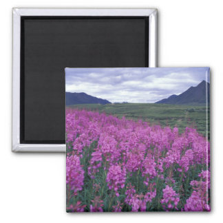 L'Amérique du Nord, Canada, le Yukon. Fleurs de Fi Magnet Carré