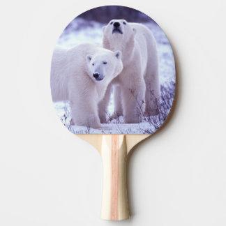 L'Amérique du Nord, Canada, Manitoba, Churchill. 2 Raquette De Ping Pong