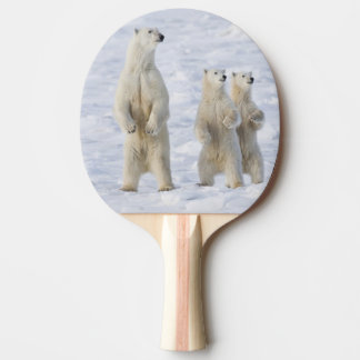 L'Amérique du Nord, Canada, Manitoba, Churchill. 5 Raquette Tennis De Table