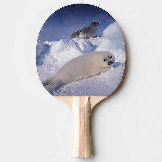 L'Amérique du Nord, Canada, Québec, La 2 d'Iles De Raquette Tennis De Table