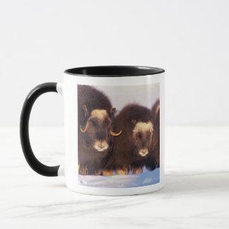 L'Amérique du Nord, Etats-Unis, Alaska, cercle Mug