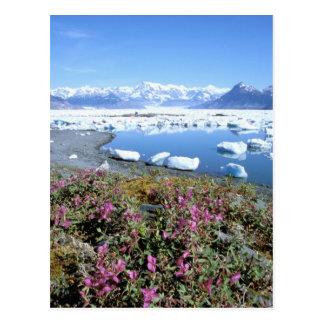 L'Amérique du Nord, Etats-Unis, Alaska, prince Carte Postale