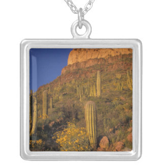 L'Amérique du Nord, Etats-Unis, Arizona, cactus 2 Collier
