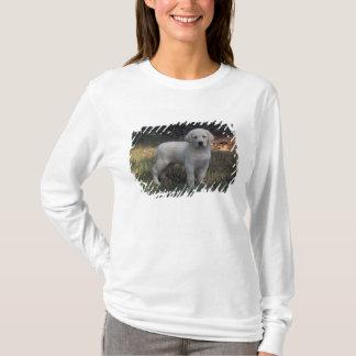 L'Amérique du Nord, Etats-Unis, la Caroline du T-shirt