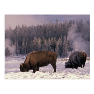 L'Amérique du Nord, Etats-Unis, Wyoming, Carte Postale