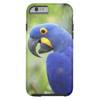 L'Amérique du Sud, Brésil, Pantanal. Mis en danger Coque Tough iPhone 6