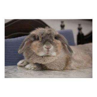 L'Andora le lapin : Chillaxing Poster