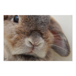 L'Andora le lapin : Regard fixe Poster