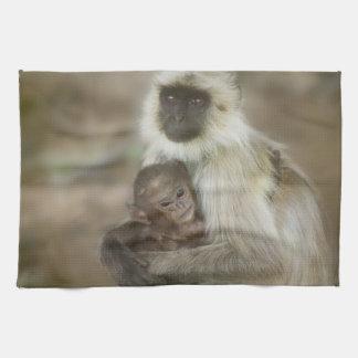 Langurs de Noir-visage, mère avec le bébé, dedans Linge De Cuisine