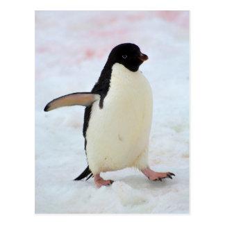 L'Antarctique. Île de Petermann. Pingouin d'Adelie Carte Postale