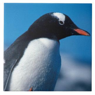 L'Antarctique, îles Sous-Antarctiques, sud Grand Carreau Carré