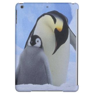 L'Antarctique. Pingouins et poussin d'empereur