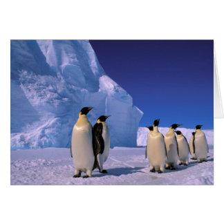 L'Antarctique, territoire antarctique australien, Cartes