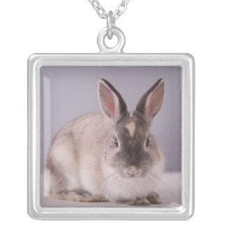 lapin, arrière - plan simple, animal, table pendentif carré