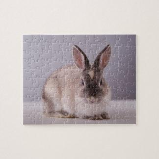 lapin, arrière - plan simple, animal, table puzzle