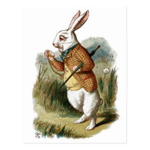 Lapin blanc d 39 alice au pays des merveilles cartes postales zazzle - Lapin dans alice aux pays des merveilles ...
