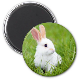 Lapin blanc magnet rond 8 cm