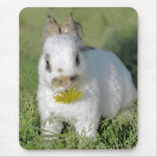Lapin de bébé mangeant la fleur tapis de souris