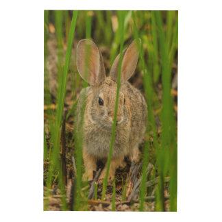 Lapin de lapin de désert impression sur bois