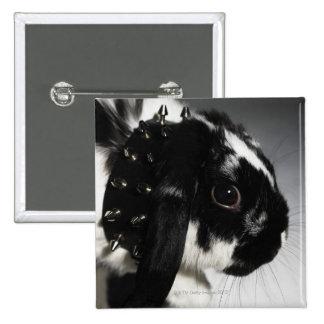 Lapin noir et blanc avec le collier clouté badges
