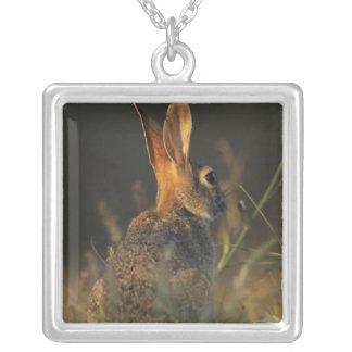 Lapin oriental, sylvilagus floridanus, pendentif carré