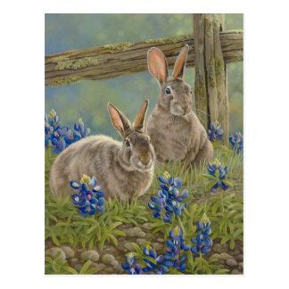 Lapins et Bluebonnets Cartes Postales