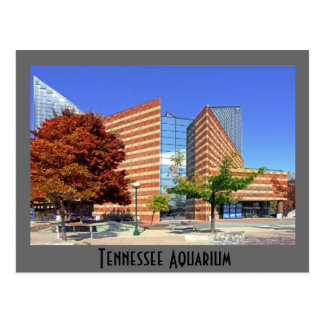 L'aquarium du Tennessee - Chattanooga, TN. Carte Postale