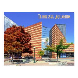 L'aquarium du Tennessee - Chattanooga, TN. Cartes Postales