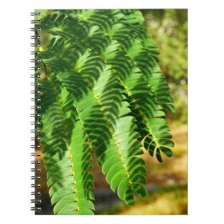 L'arbre en soie persan laisse le carnet de photo