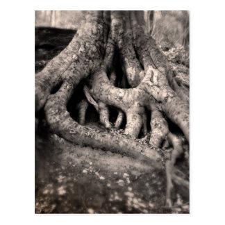L'arbre enracine la carte postale