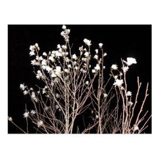 L'arbre noir et blanc fleurit le ciel déplaisant carte postale