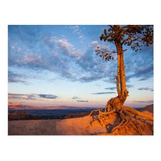 L'arbre s'accroche au rebord, parc national de carte postale