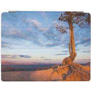 L'arbre s'accroche au rebord, parc national de protection iPad
