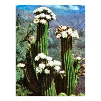 L'Argentine vintage, cactus fleurissant Carte Postale