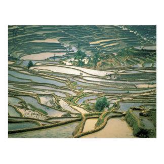 L'Asie, Chine. Les terrasses inondées de riz Carte Postale