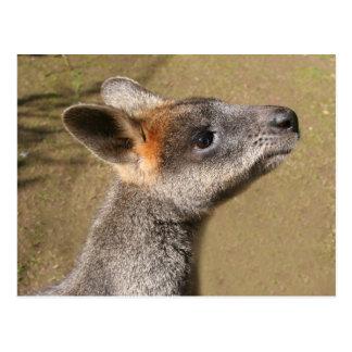 L'Australie - carte postale de wallaby