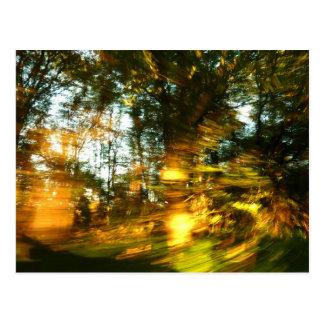 L'automne brillent ! carte postale