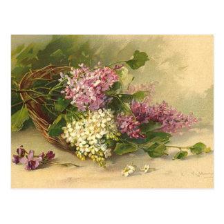 Lavander et beauté blanche cartes postales