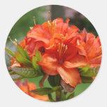 L'AZALÉE FLEURIT 14 tasses oranges de cadeaux de Sticker Rond
