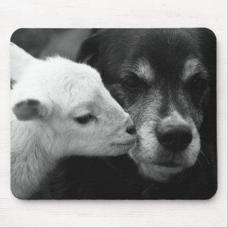 Lafiabougou : Un berger sodomise son mouton Bamadanet