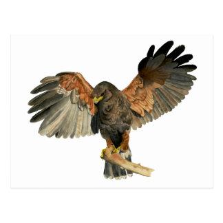 Le battement de faucon s'envole la peinture carte postale